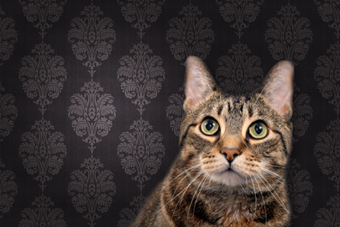 Cat in front of wallpaper and looking up
