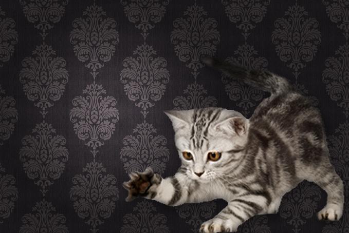 Grey kitten in front of wallpaper