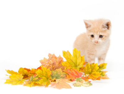 Kitten in front of a pile of leaves