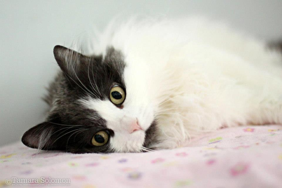Cat lying down on its side