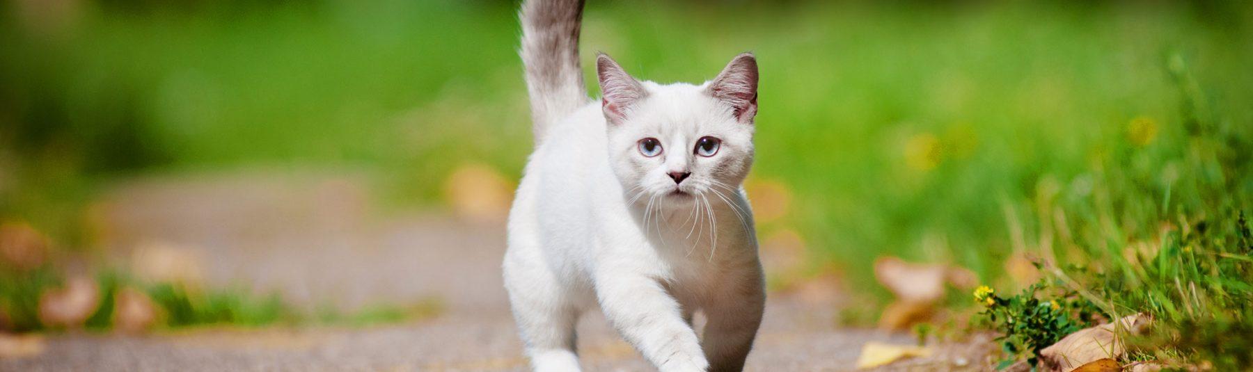 killarney-cat-services