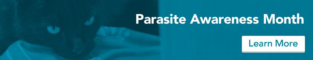 cat-parasite