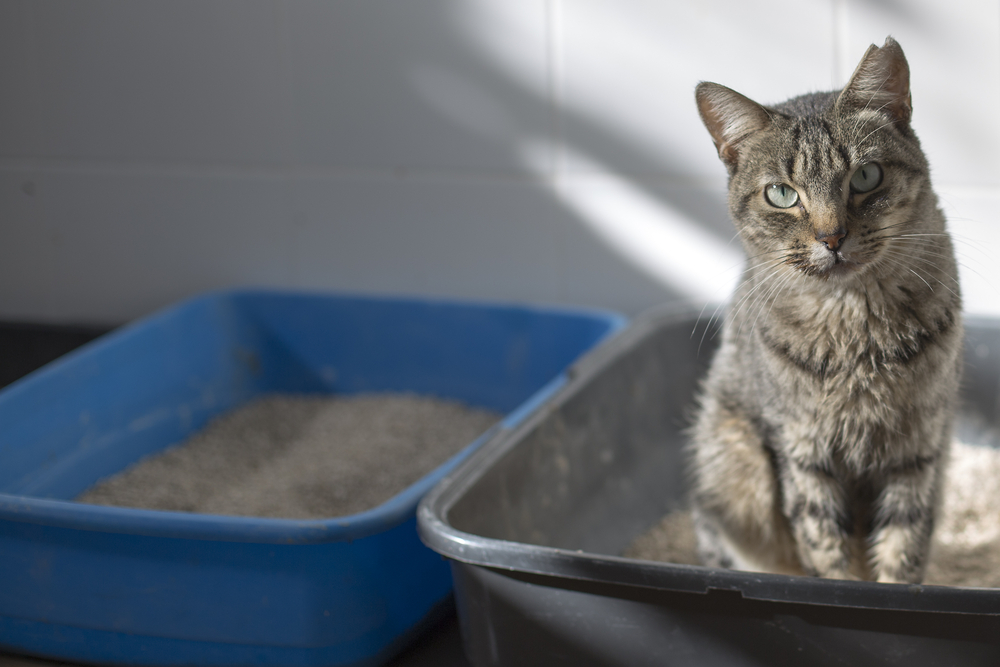 Cat sitting in a litter box
