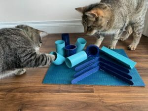 Cats playing with an activity board