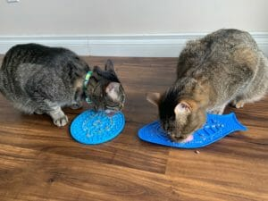 Cats licking lick mats