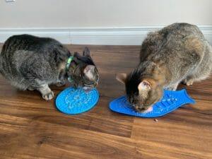 Cats licking lick mats