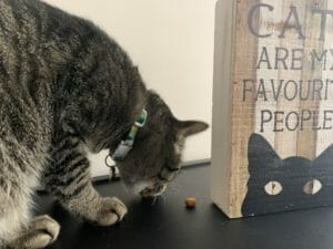 Cat eating kibble beside a wooden block