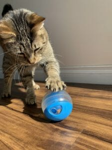 Cat playing with a treat ball
