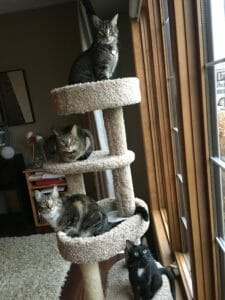 Cats on a cat tower