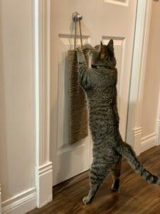 Cat scratching a door-hanging scratcher