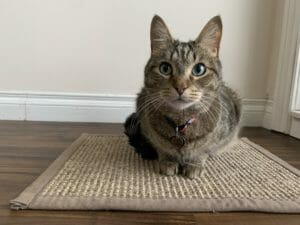Cat lying on a carpet rug
